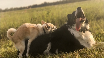 Signs Your Pets Are Friends