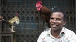Indian Man Dies After Being Attacked By Rooster On Way ToIndian Man Dies After Being Attacked By Rooster On Way To Cockfight Cockfight