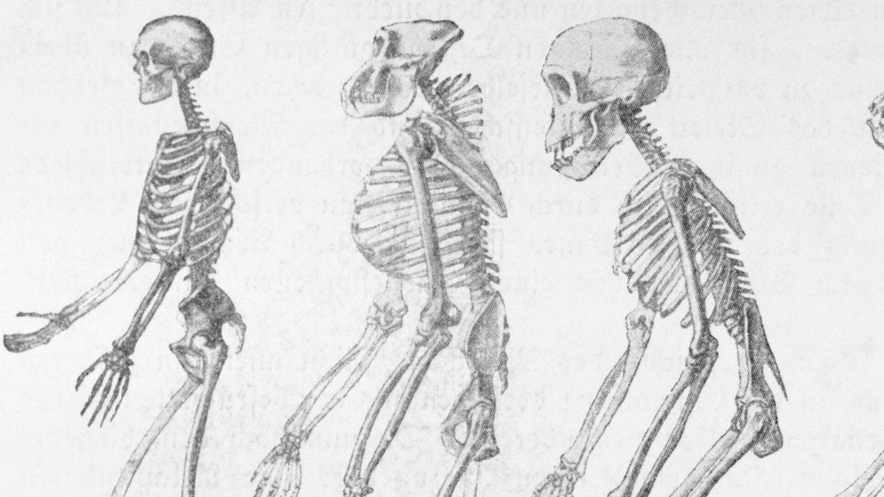 Old Age: Mysterious 'Ghost Population' DNA Of Ancient Humans Discovered