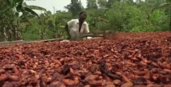 Ivory Coast cocoa industry scrutinized over child labor