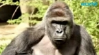 Watchdog group wants Cincinnati Zoo punished for gorilla's death