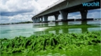 Stinking,  Hideous Florida Algae Bloom Shoves Federal Government into Action
