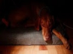 These Are The Symptoms Of Depression In Pets