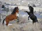 The US Government Will Pay You $1,000 To Adopt A Horse