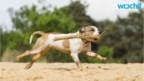 Dog's Beach Vacation Captured in Touching Photographs Before He Died